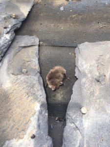Bat found